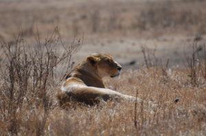 wildlife_traffiking_africa-2